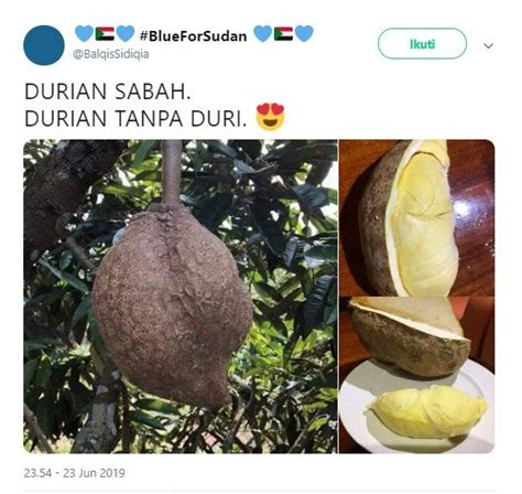 viral durian  duri sukses bikin warganet penasaran