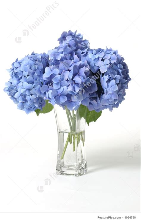 Can You Cut Hydrangeas For A Vase by Hydrangeas In Vase Picture