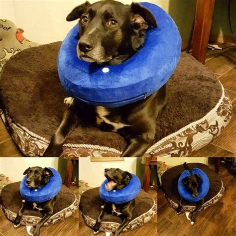 how to treat hotspots on dogs 1000 ideas about spots on for