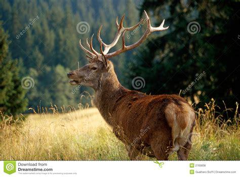 dear royalty  stock  image