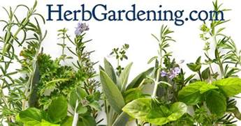 growing herbs herb gardens how to grow herbs indoors and out