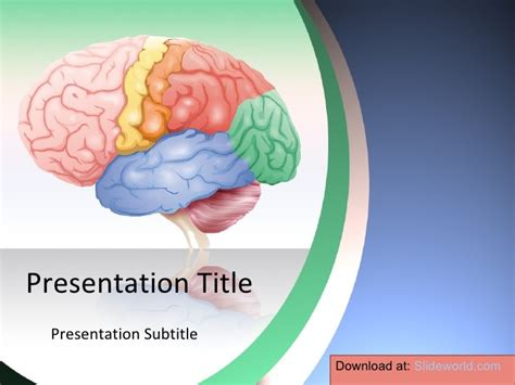 brain anatomy powerpoint template