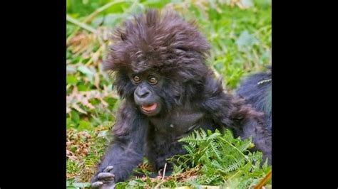 Fear Of A Bad Hairday No Need To Worry With This Hair Blower by Animals Bad Hair Day Slideshow