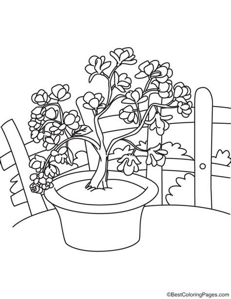 coloring pages of magnolia flowers magnolia flowers coloring page free magnolia