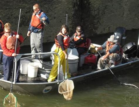 pa fish and boat regional reports pfbc 2010 biologist report monongahela river