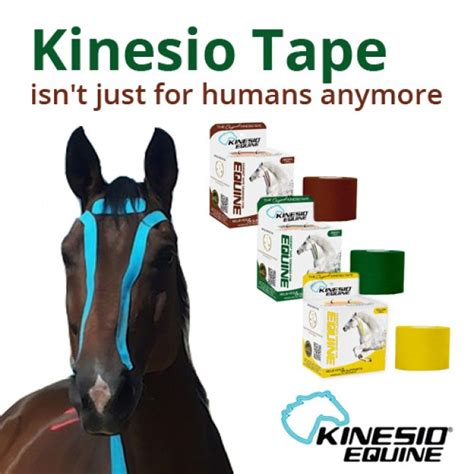 kinesiology taping for horses the complete guide to taping for equine health fitness and performance books kinesio for horses and other animals