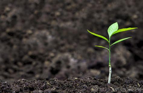 Planter Soil by Gardening Resolutions 2017