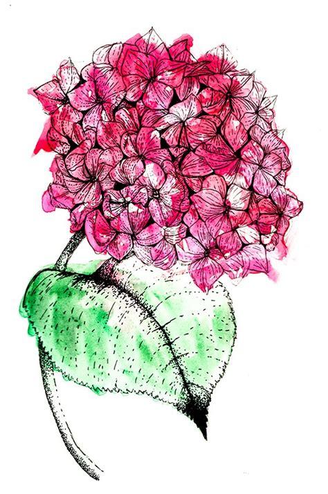 drawing   week hydrangea flower ellas place