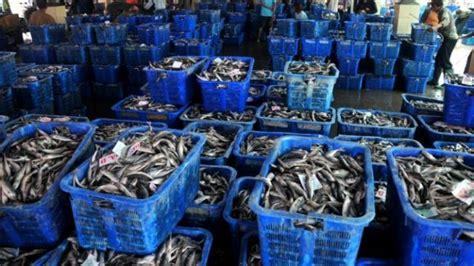harga ikan segar  dijual nelayan pangandaran harapan rakyat