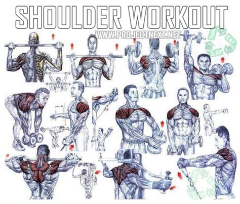 shoulder workout healthy fitness exercises bicep