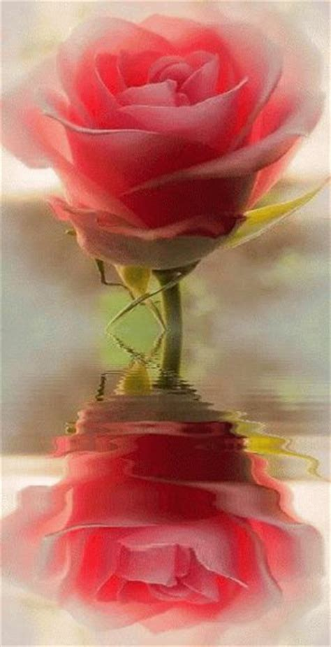 imagenes hermosas zen animadas 17 melhores ideias sobre rosas no pinterest rosas