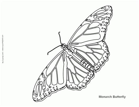 coloring page for monarch butterfly monarch coloring page coloring home