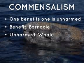 Barnacles on whales commensalism commensalism