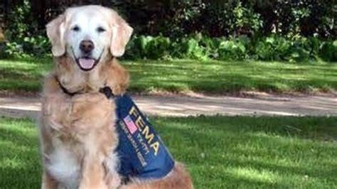 rescue dog bretagne   honored  sept