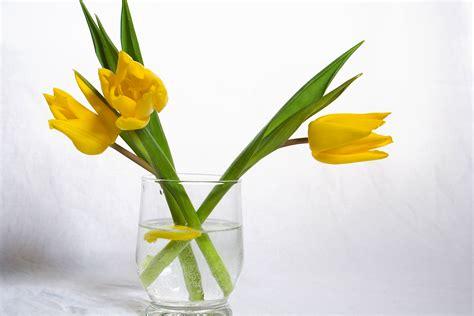 Yellow Flower Vase reo faq san fernando valley reo