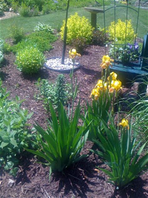 bathtub flower bed our garden path bird bath flower bed filling in nicely