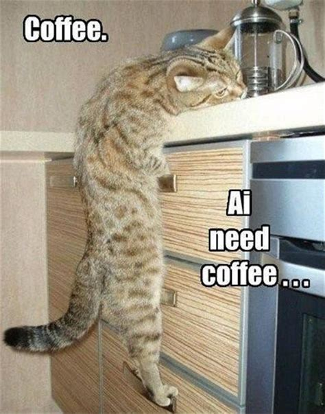 Need Coffee Meme - i need coffee meme