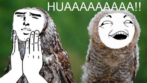 Art Owl Meme - owl memes by gladin121 on deviantart