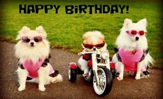 happy birthday dog biker gang happy birthday pinterest