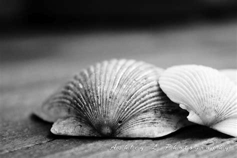 L Shells by L Photography Sea Shells