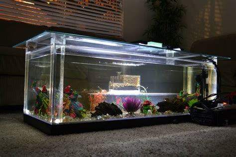 diy aquarium coffee table aquarium fish tank coffee table 8 unique designs guide