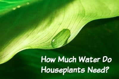 how much water does a need how much water do my houseplants need by hybrid rasta