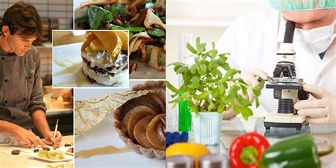 food technology food technology career food technologist careers in