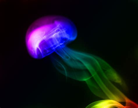 what color are jellyfish multi colour jellyfish smoke claire carey flickr