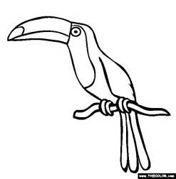 toucan coloring page picture of toucan to color toucan coloring page free