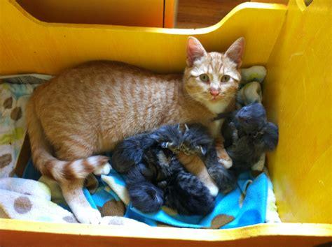 Litter Of Kitties by Cat Nurtures Litter Of Abandoned Kittens Krbd