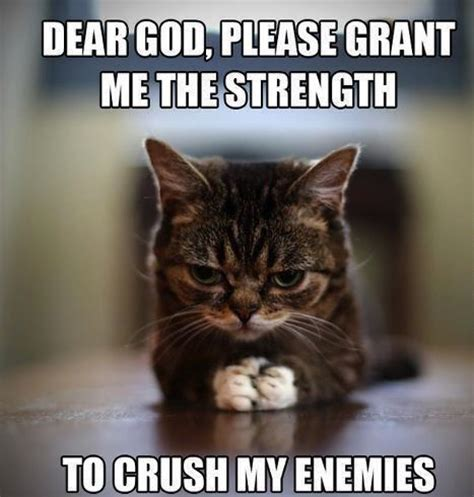 Cute Cat Memes - cats funny and cat memes on pinterest