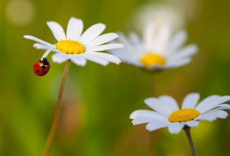 fiori italia insetti benefici per il tuo giardino floraqueen italia