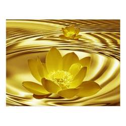 Golden Lotus Meaning Golden Lotus Flower Postcard Zazzle