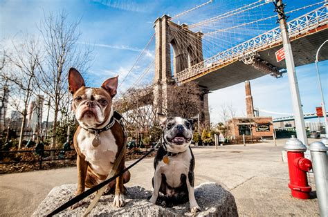 free puppies nyc here s how to travel with your pet stress free away travel