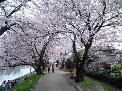 japan möbel paisajes de japon cerezos 33 unico en el mundo