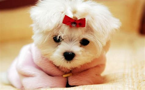 cutest puppy 2048 dogs