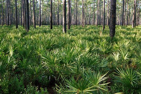 Osceola Records Osceola National Forest