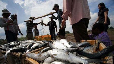 Pakan Ikan Lele Jitu trik jitu tingkatkan produksi bandeng kombinasikan pakan