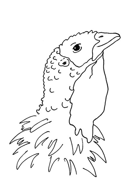coloring pictures of turkey heads turkey head coloring pages