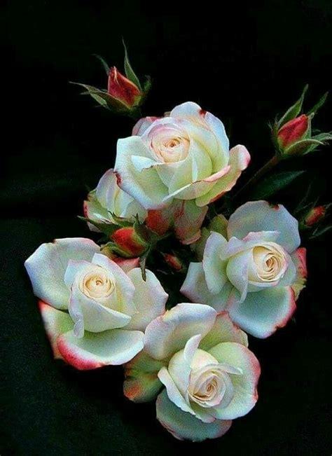 Blumen Pflanzen 3070 by 2186 Besten Bilder Auf Natur Blumen Und