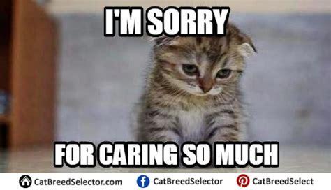 Sad No Meme - really sad cat meme funny cute angry grumpy cats memes