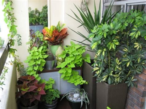 Balcony Garden On Pinterest Canna Lily Balconies And Garden Ideas For Small Balconies