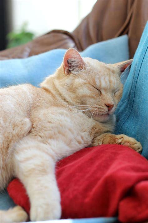 Relaxing Pillow relaxing on pillows by lissou photography on deviantart