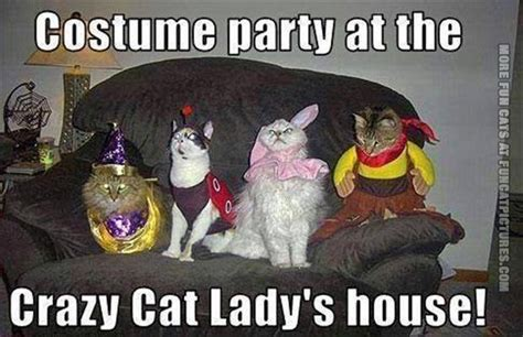 Halloween Birthday Meme - crazy cat lady s costume party fun cat pictures