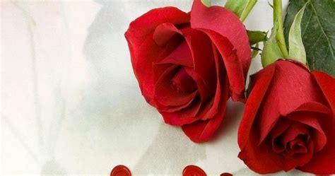 Minyak Atsiri Bunga Mawar carane kepiye 20 gambar foto bunga mawar merah