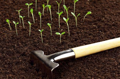 winter gardening make seed rolls for winter gardening project