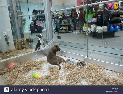 puppy stores nj pet store stock photos pet store stock images alamy