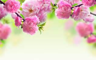 image of spring flowers spring flowers background wallpapers pictures