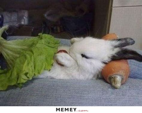 bunny memes funny bunny pictures memey com