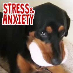 signs of stress in dogs signs of stress or anxiety in dogs